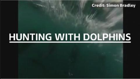Dolphin_vid
