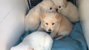 The fluffy foursome are believed to be around two months old.