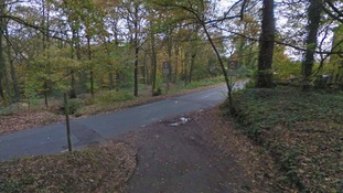 Third dog in two weeks 'left for dead' in woods