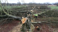 'Devastation' as 200 veteran trees illegally cut down