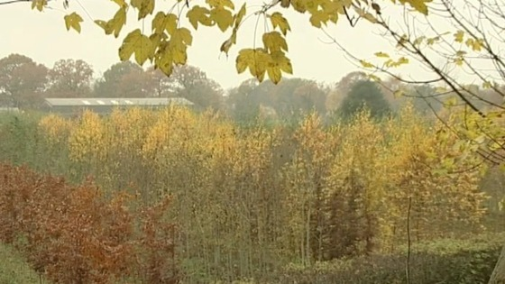 Fears for ash trees in the Midlands