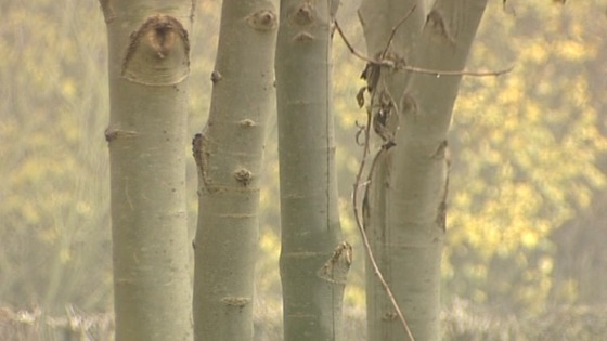 The National Forest has issued advice to stop ash dieback spreading