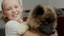 Ten-year-old reunited with stolen puppy