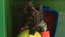 Cat found in skip returned home after three years