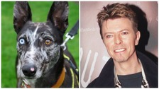 Bowie the dog finds a home at last