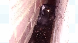 Fire and rescue teams called to save a cat stuck between two walls measuring 15cm