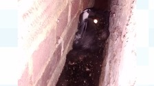 RSPCA called to rescue a cat stuck in between a wall