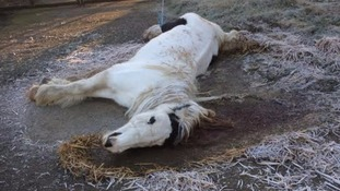 Horse left for dead in freezing conditions