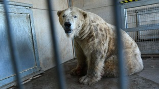 Health check-up for country's oldest polar bear