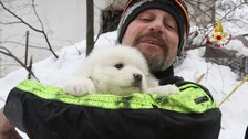 Puppies rescued from Italian hotel five days after avalanche