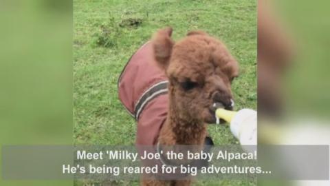 MILKY_JOE