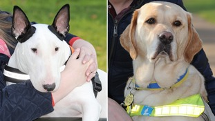 Heroic dogs who 'saved owners lives' nominated for prestigious award