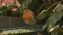 A robin on a bird table.