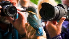 The RSPB's Big Garden Birdwatch will take place on 28, 29 and 30 January 2017.