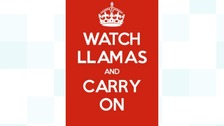Keep calmer - watch llamas