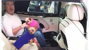 Simon Cowell and his dogs Squiddly and Diddly