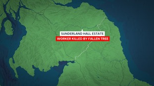 Forestry worker killed after being hit by tree