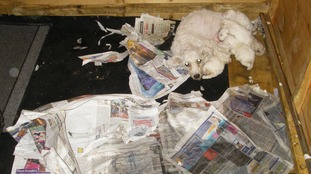 Some of the dogs were dying and others were suffering serious health problems.