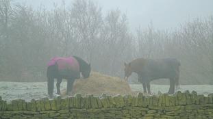 Dinner time for horses near Huddersfield