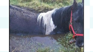 Neigh bother: Fire service rescue horse stuck in the mud