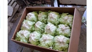 The photo of the lettuce on Gumtree in Acocks Green