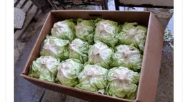 Salad crisis: Man sells lettuce on Gumtree for £50