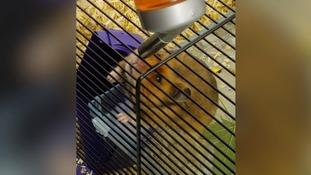 Man jailed for drugging hamster with LSD