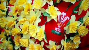 Wales shirt covered with daffodils