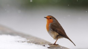 Cold snap could bring snow to some parts of the South East