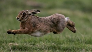 Dispersal order to prevent Lincolnshire hare-coursing
