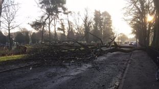 Schoolboy hospitalised after being hit by falling tree