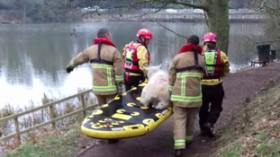 Sheep get rescued from Lymm Dam