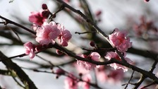 Signs of Spring.  Temperatures on the up, but will conditions stay fair?