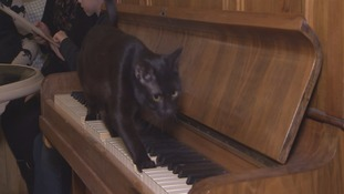 Cat walking on piano