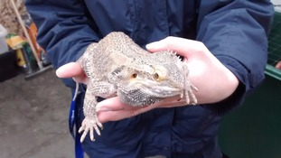 'Poor beardie' abandoned in cold and wet weather