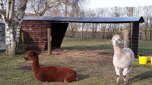 Eric and Ernie enjoying the sunshine