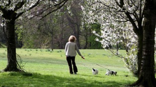 People who shop irresponsible dog owners could get free council tax