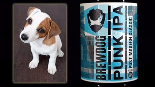 BrewDog workers to get Puppy Parental Leave to help new arrivals settle in