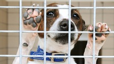Charities: Increase animal cruelty sentence to five years