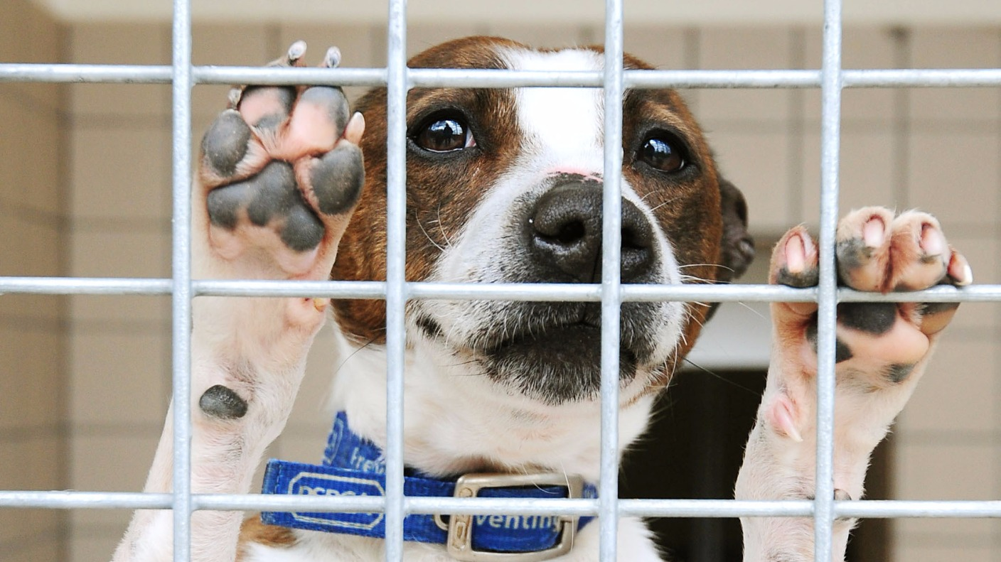 Charities Increase Animal Cruelty Prison Sentence To Five