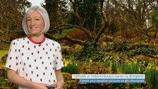 Wales weather: Warm rain!