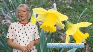Wales Weather: Mild but damp and drizzly!