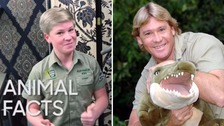 Robert Irwin looks a lot like his 'Crocodile Hunter' father Steve Irwin.