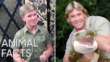 Crocodile Hunter Steve Irwin's son follows in his footsteps