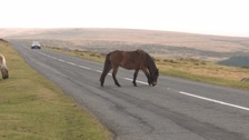 More animals being killed by speeding motorists