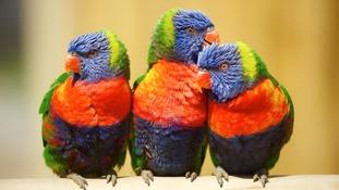 Zoo accidentally kills off 11 exotic birds