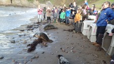 People gather to watch the seal pups return to the wild.