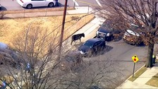 The bull is chased along the street.