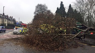 Presenter Alex Beresford took this photograph of a fallen tree on Wednesday.