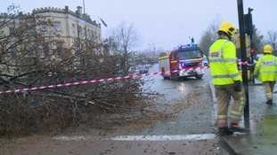 Schoolboy 'lucky to survive' after tree fell on him
